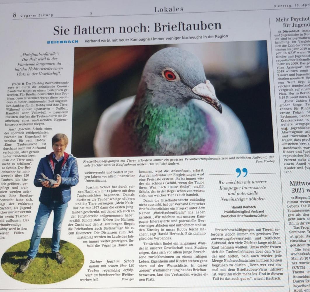 brieftaubenfueralle-in-der-Siegener-Zeitung